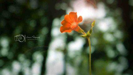 bokeh flower cute love