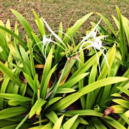 whiteflower green iclicks garden