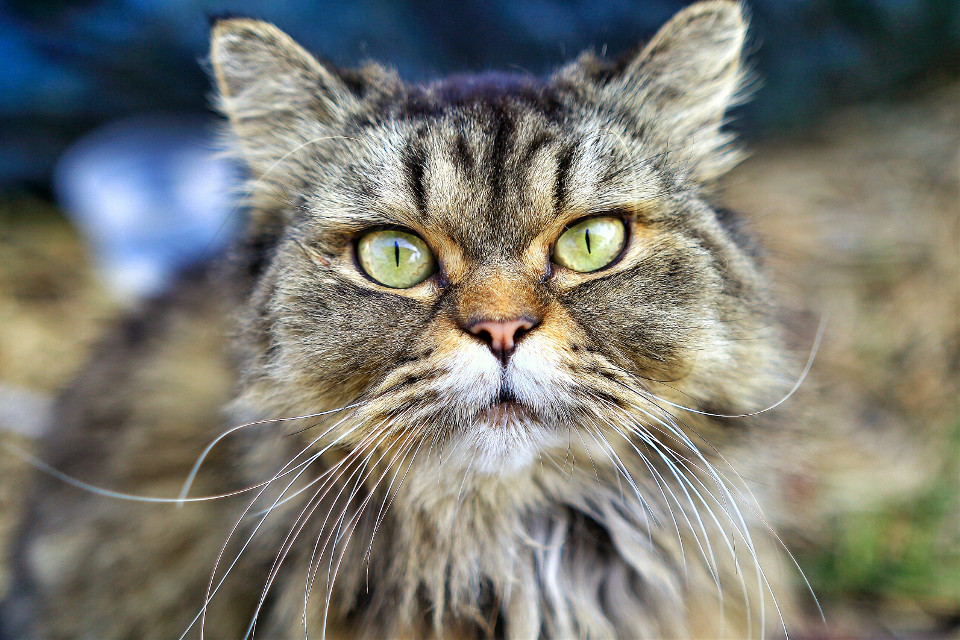 #cat #eyes #photography  #nature  #shallowdepthoffield