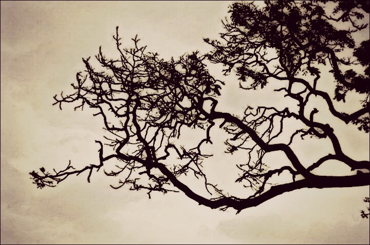 #trees#outdoors#nature#blackandwhite#blackorwhite #sepia #freetoedit #sepiaeffect