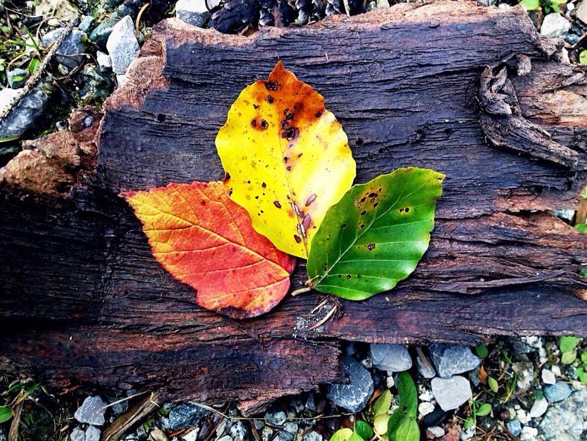 #art#autumn#red#orange#yellow#green#leaves #wdpautumn #fall