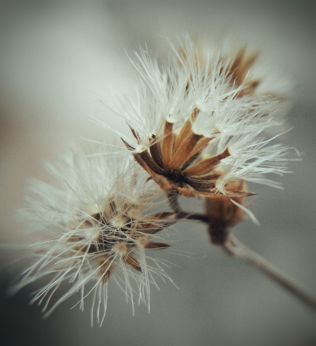 #flower #nature #photography #macro