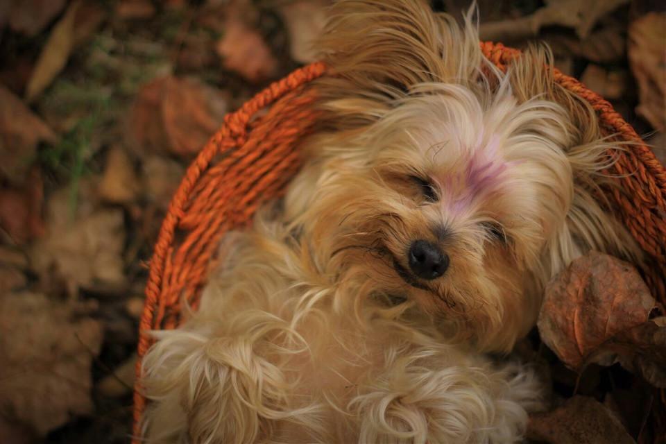 #dog #fall #autumn #cute
