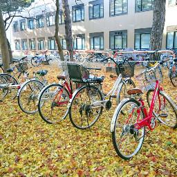 japan hokkaido h hokkaidouniversity cycle
