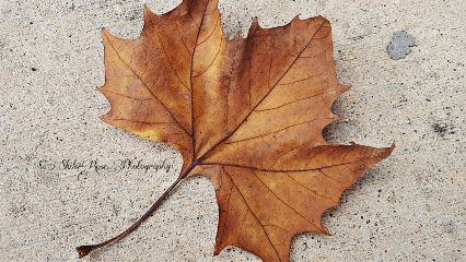 wppfallcolors fall photography nature leaf