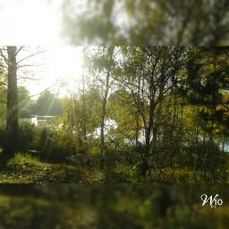 nature autumn sun