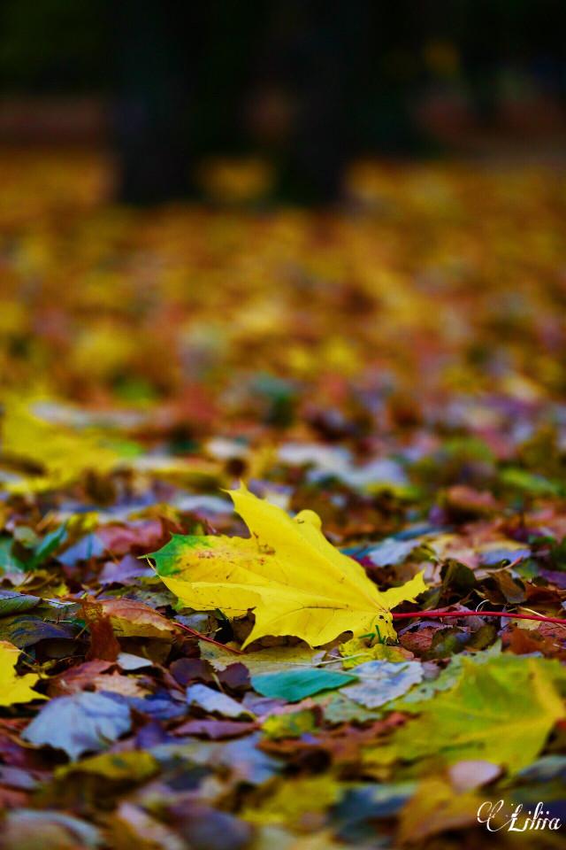 #autumn #nature #freetoedit #fall