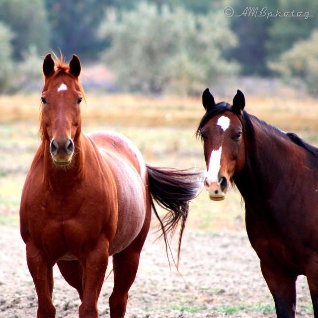 Horsey stare down!   #nature #animals #horse #horses #portrait