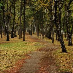 nature emotions autumn
