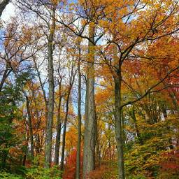 fall leaves autumn trees forest
