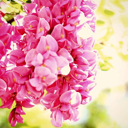 highcontrast twilight pink flowers