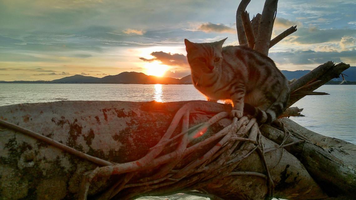 Chaba cat #บ้านแมวหนวด #แมว #cats #chill #holiday #beach #sea #sky #sunset #clouds #neko #stone #amzingthailand #phuket #thailand #trip #travel #island #smile  #hdr #chill #lgg4