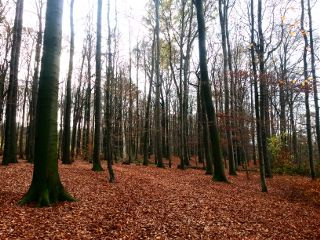 forest wood wald natur harvest