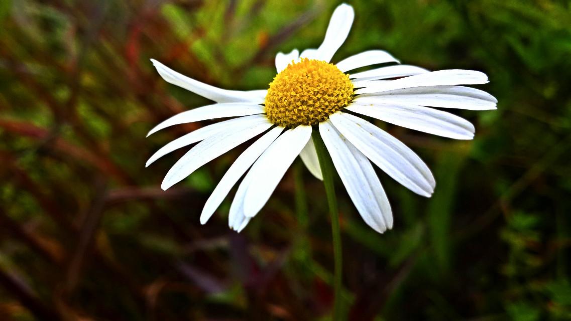 #nature #flower #summer #photography