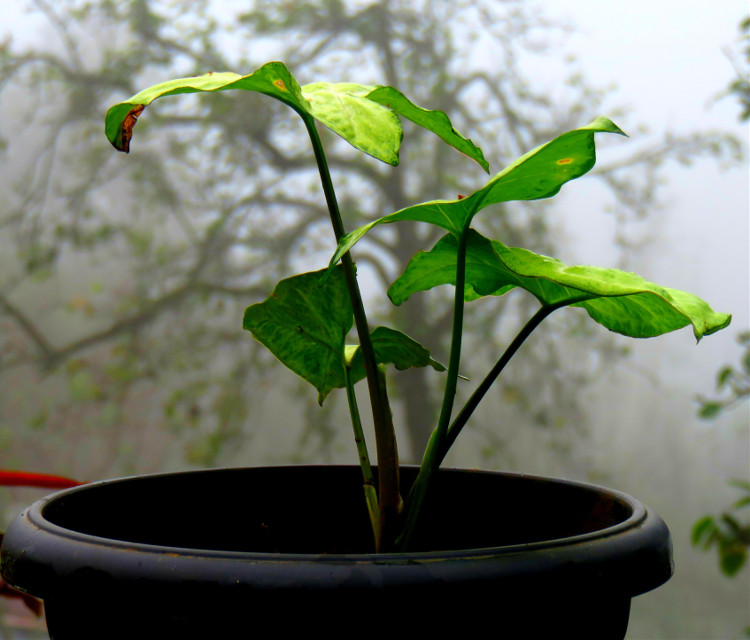 Plant#leaf#outdoors#monsoon