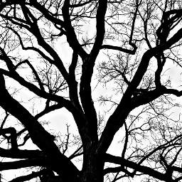 treelove photography bare picsartlife lookup