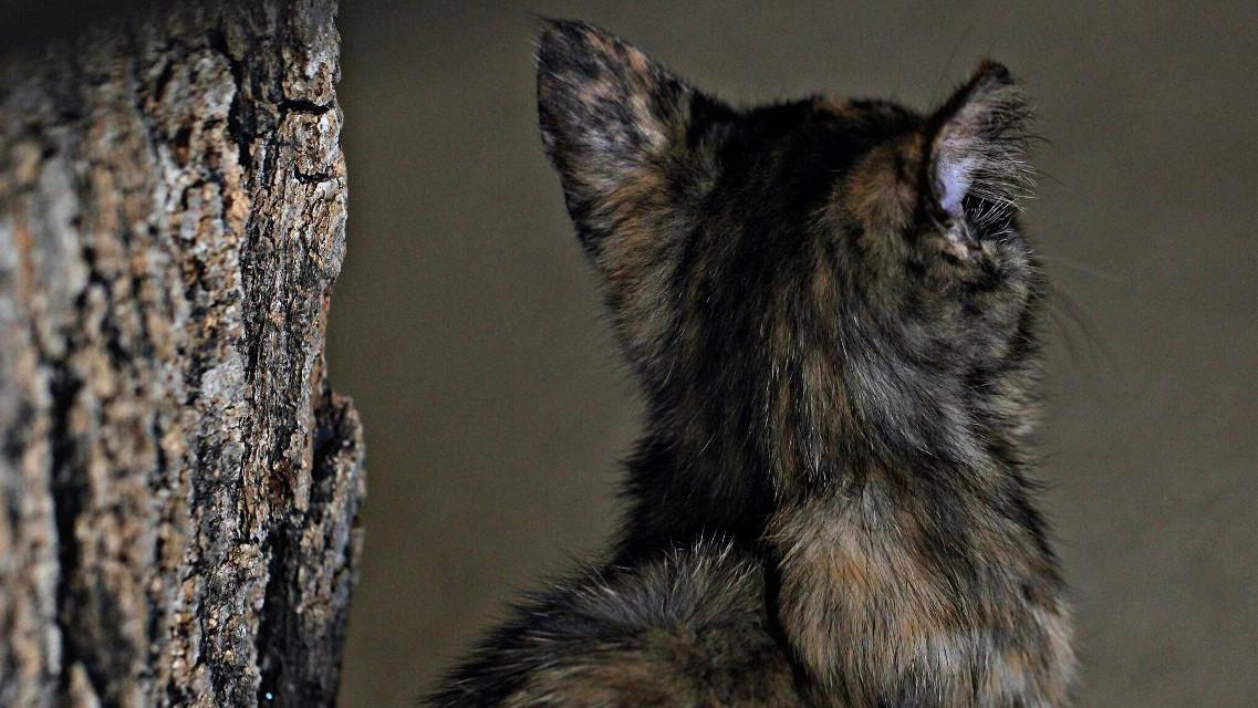 #cat #cats #kitten #kitty #pets&animals #petsandanimals #pets #photography #wppanimals #mypet #featured