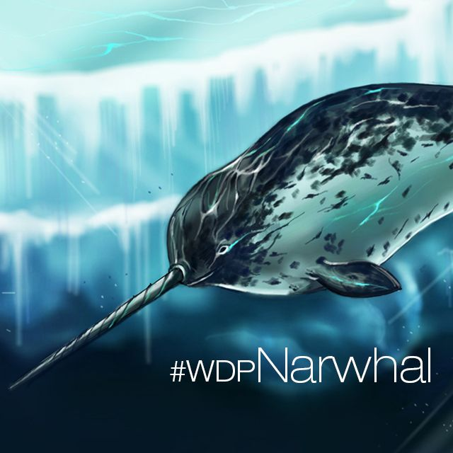 narwhal drawing competition