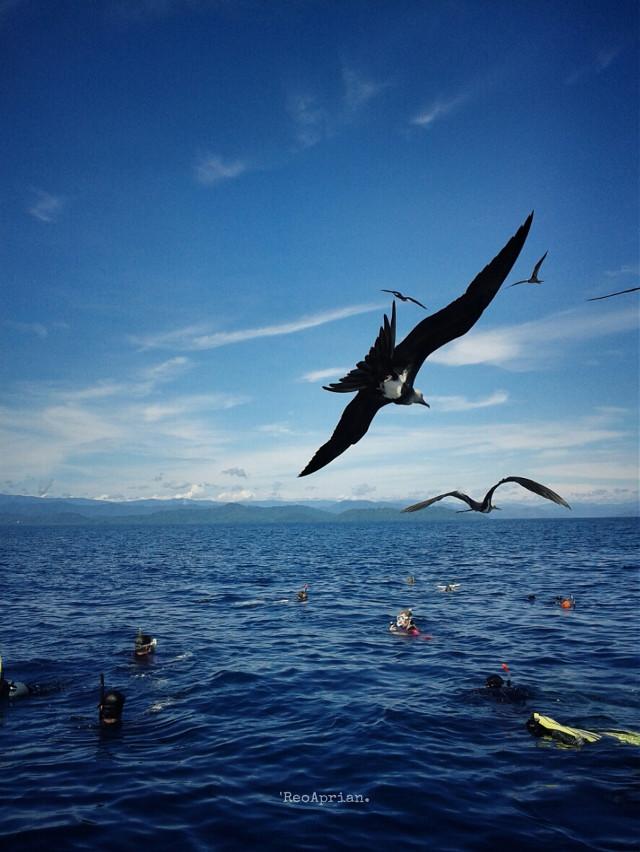 Fly away. Morning Sunday...🌏🌅🌞  #sea #bird #snorkel #cenderawasih #bay #indonesia