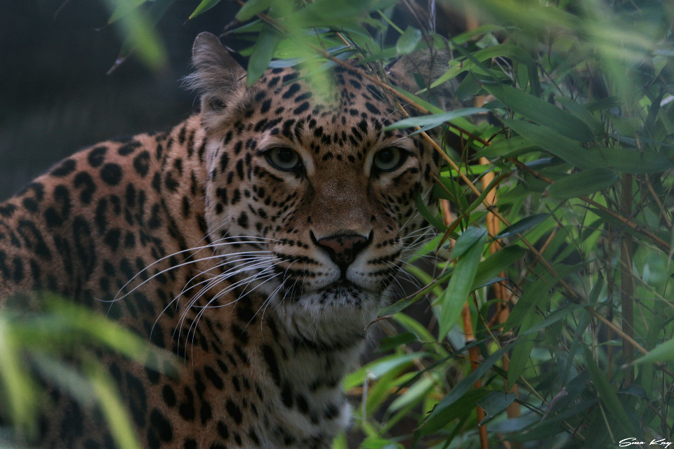 #cat #photography #nature #petsandanimals #animals #zoo