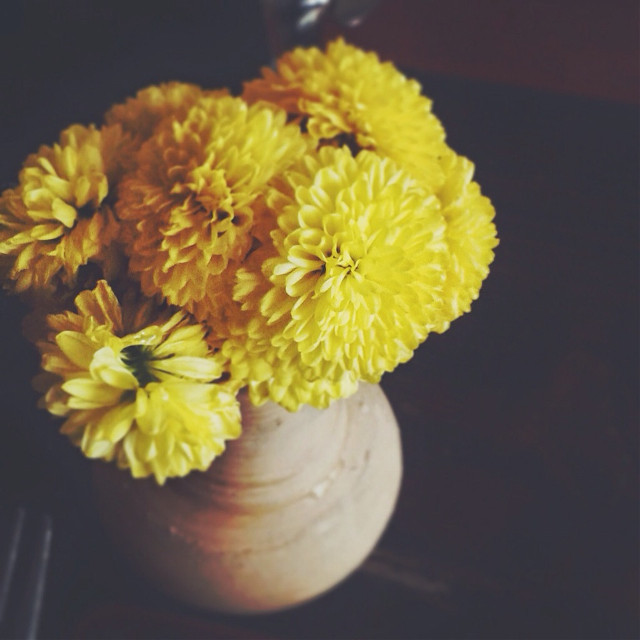 See the beauty in all small things🌼   #yellow #flowers #fragile #colorsplash #wapfilmeffects