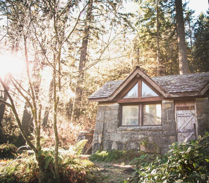 #wapfilmeffects  #freetoedit #photography #Oregon #tree #pnw #canon #picoftheday