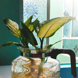 nature photography sun plantas love