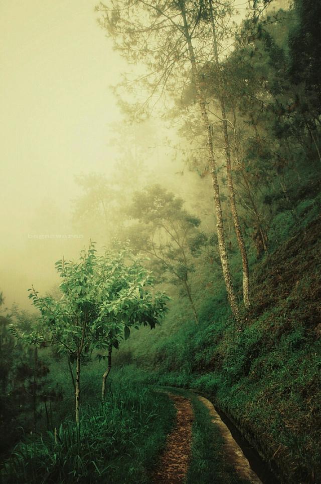 #nature #travel #photography #fog