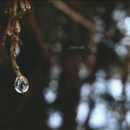 photography raindrops closeup nature tiny