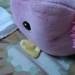 freetoedit petsandanimals randomshot peekaboo cute