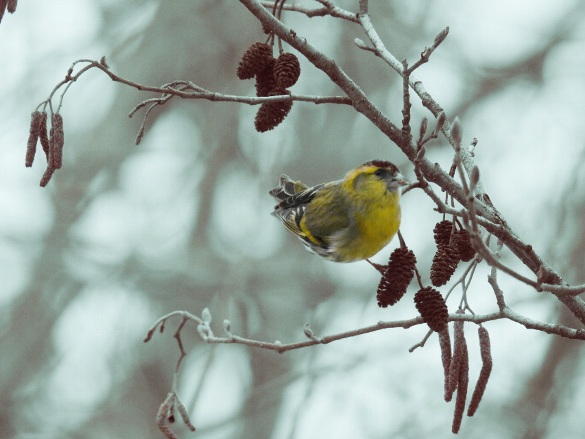 #bird #nature  #vintageivory