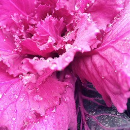 flower raindrops beautiful nature persepective