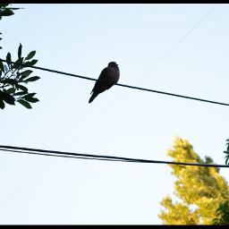 nature oldphoto birds