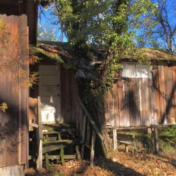 old deserted abandoned shack grownover