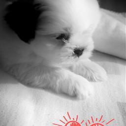 blackandwhite cute photography petsandanimals dog