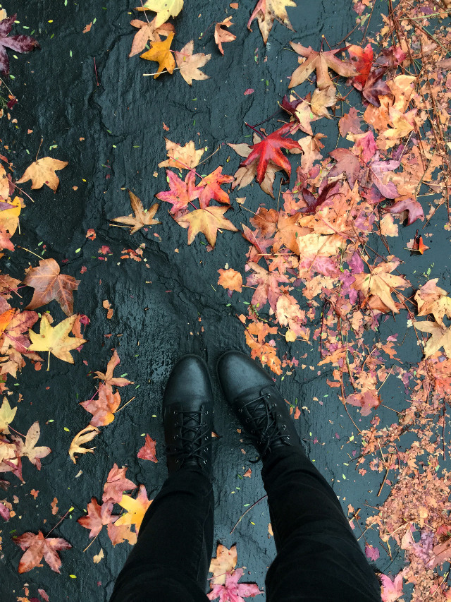 another favorite from this season   #leaves #shoes #rain #colorful #orange #yellow #red #fall #vivid