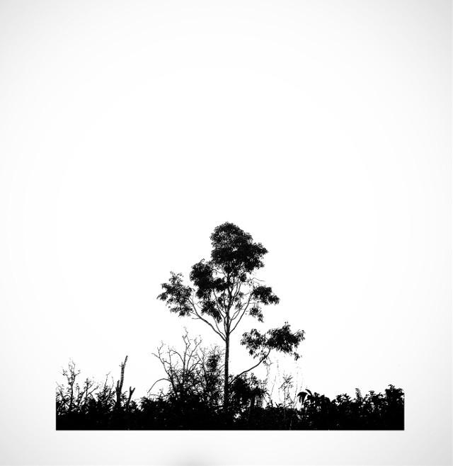 #picsart #LanNg #photography #photo #blackandwithe #nature #tree