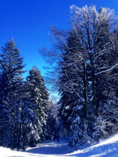winter nature snow pohorje slovenia