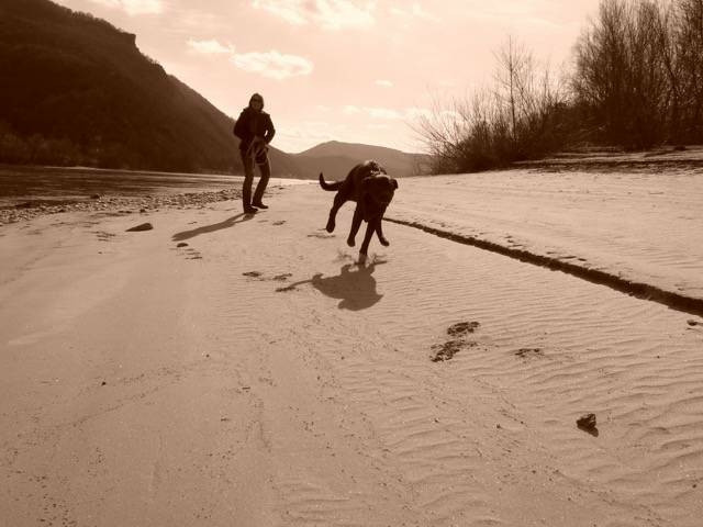 danube Beach austria #blackandwhite #photography #people #petsandanimals #nature