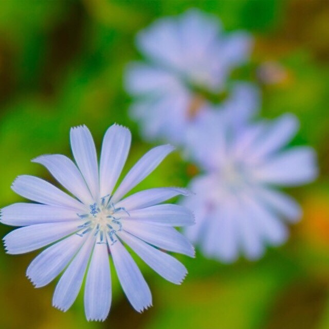 #softfocus #flowers  #photography