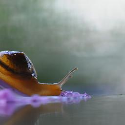 purple photography macro morning sadness