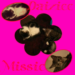 familypets daiziee missie