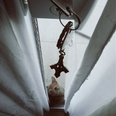 petsandanimals photography keys cats toureiffel