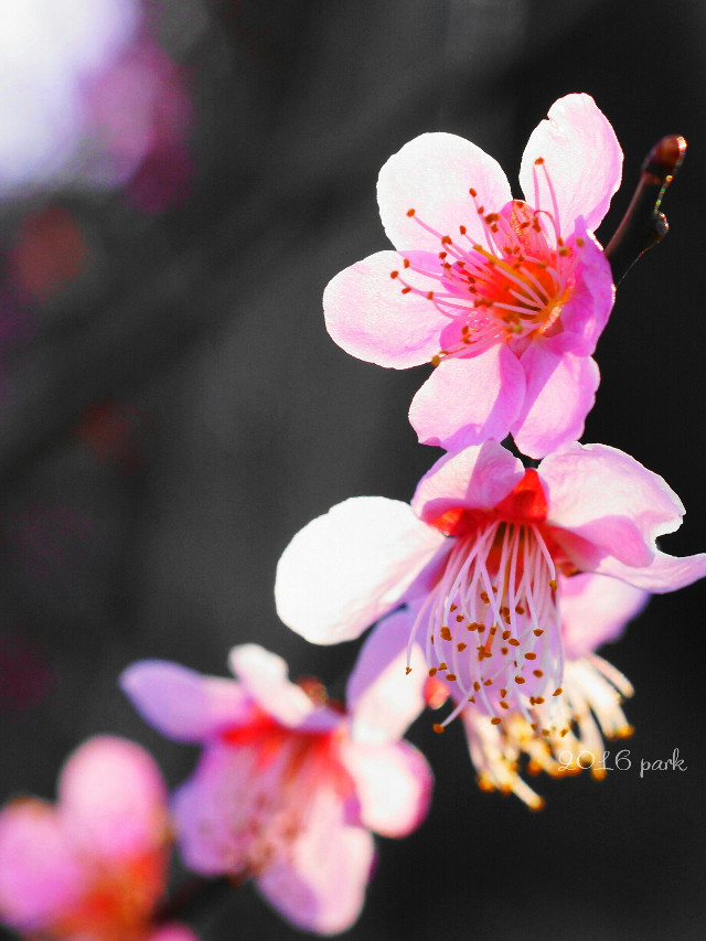 #nature #flower #colorful #macro #spring #photography