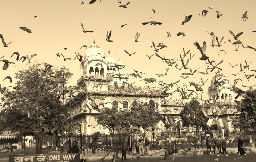 #Birds #sky #monument