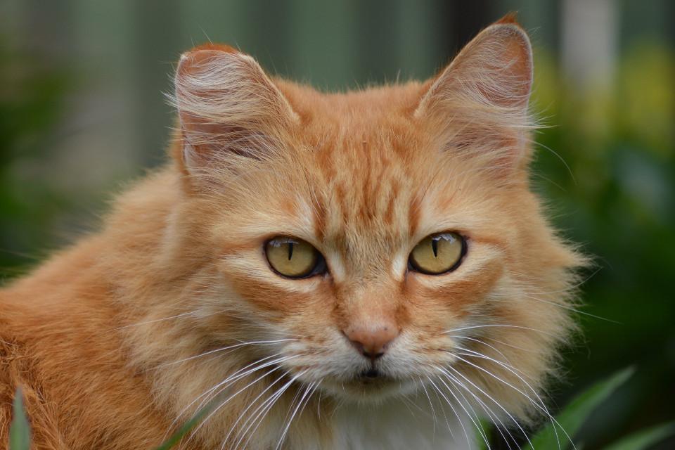 #eyes #pets Did you bring my dinner?
