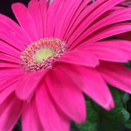 summer persepective flower pinkflower pink