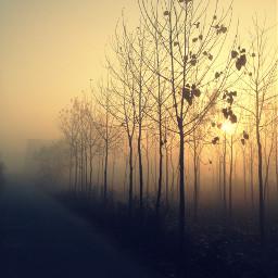 crossprocess fog iphonephotography pcmyfavshot myfavshot worldphotographyday