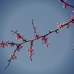 nature flower twilight featured freetoedit