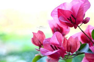 colorful photography nature closeup